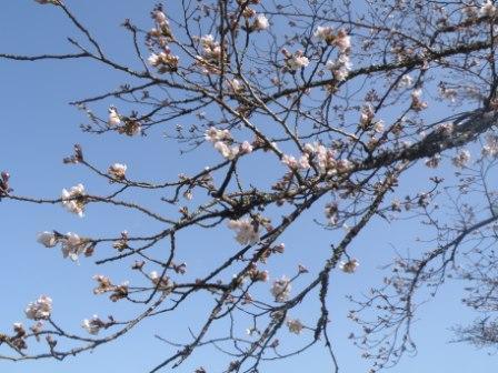 sakura-028.jpg